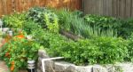 Intercropping creates a healthy, diverse garden habitat