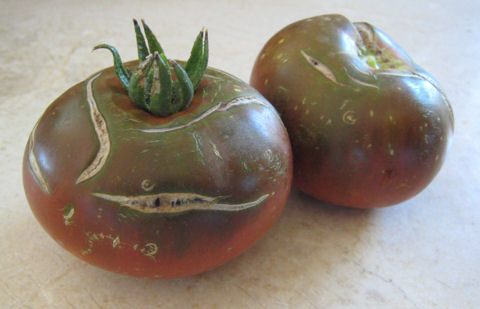 Chocolate Vintage Heirloom Tomato