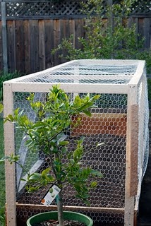 Varmit-proof garden box