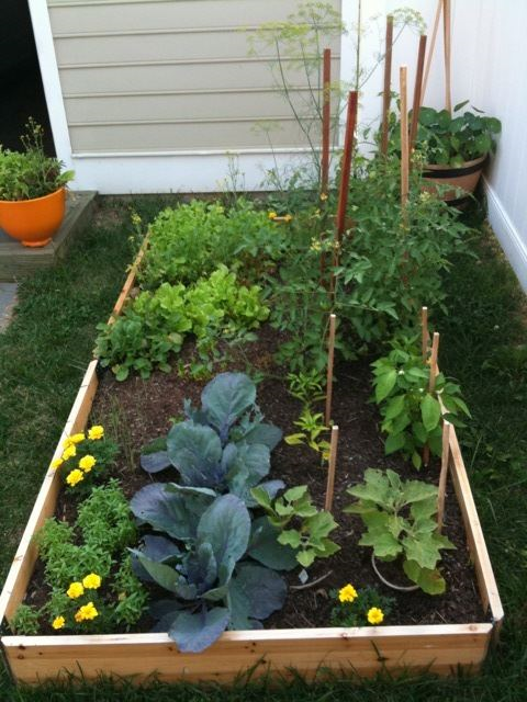 Beautiful veggie garden bed
